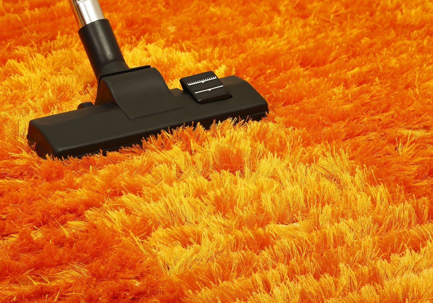 professional carpet cleaning west auckland